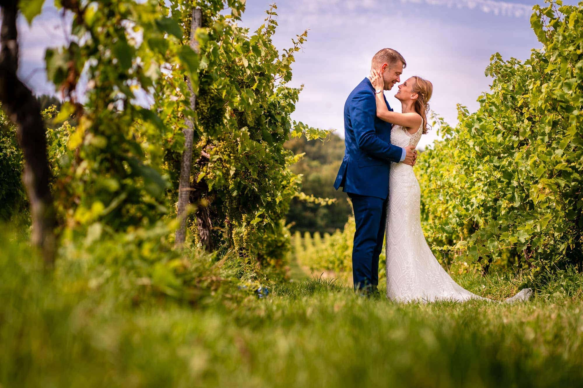Small Family Wedding at Denbies - Couple Portrait in among the vines