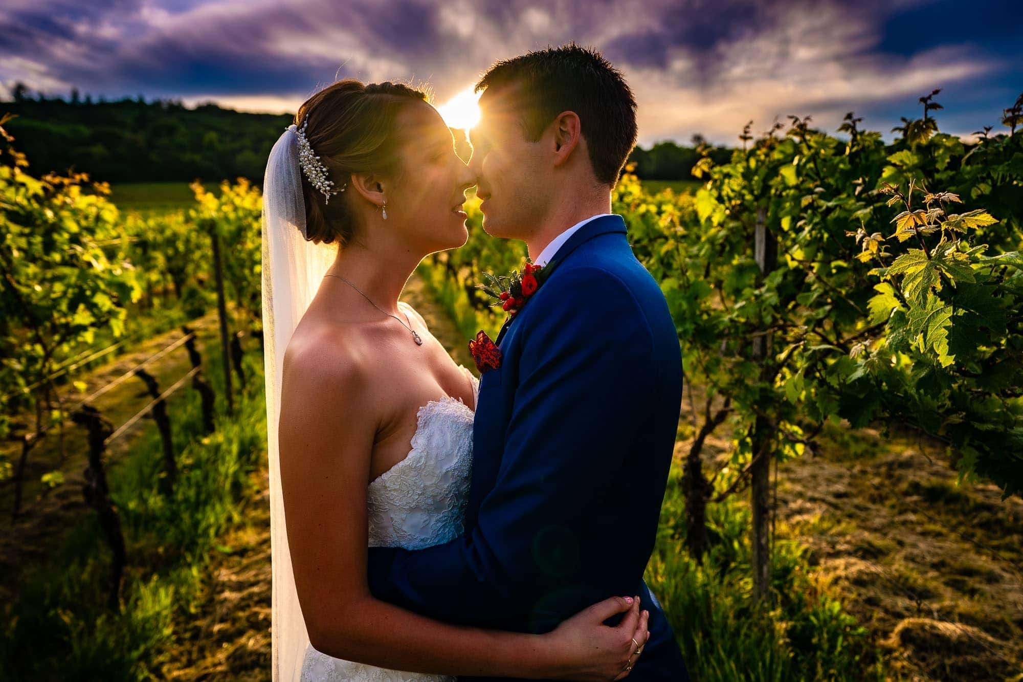 Denbies Wine Estate Wedding Photography. Wedding Portrait in the vineyard at sunset by Tansley Photography